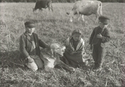 Cowherds of the Mosna farm (1898)
